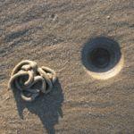 a lugworm cast and blow hole