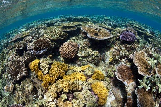 Great Astrolabe Reef, Kadavu