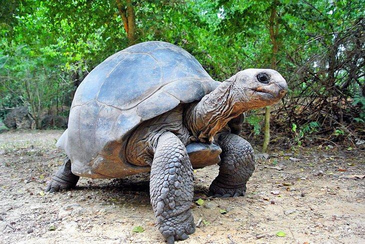 Tortoise at Haller Park