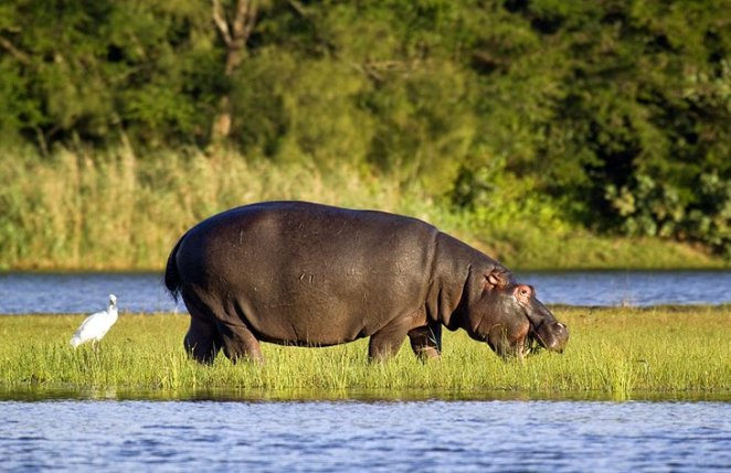iSimangaliso Wetland Park, KwaZulu-Natal