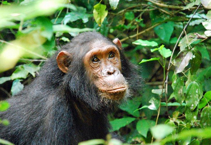 Monkeys at Gombe Stream National Park