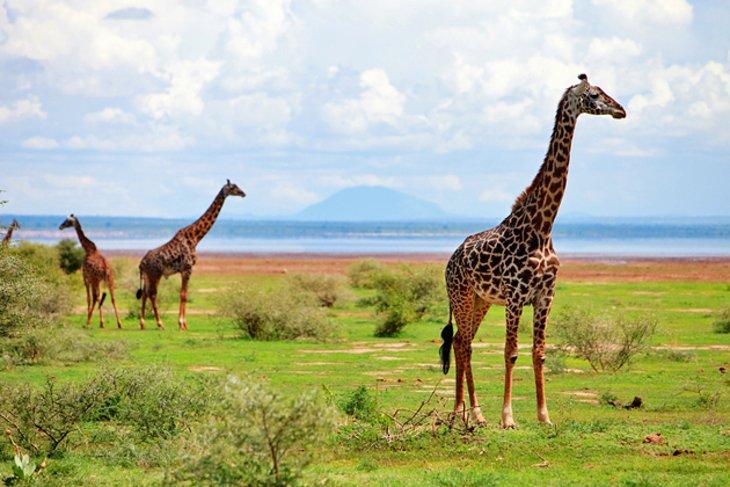 Wild Life at Lake Manyara National Park
