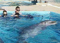 Nadar entre delfines