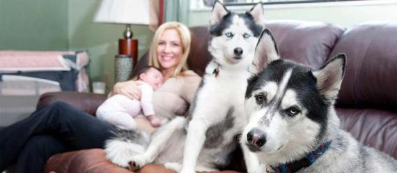 Apartamentos que aceptan mascotas