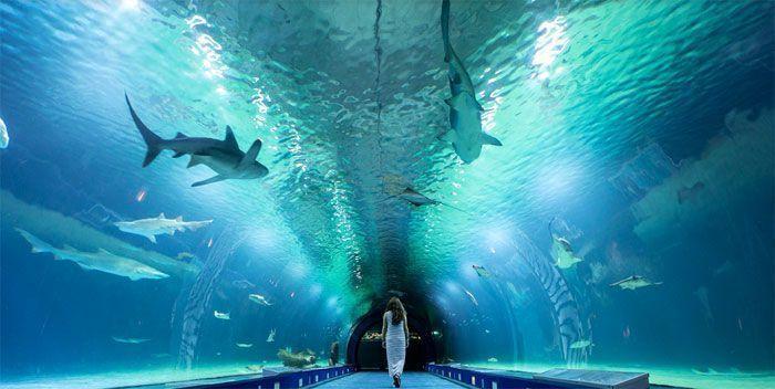 Túnel submarino Oceanogràfic