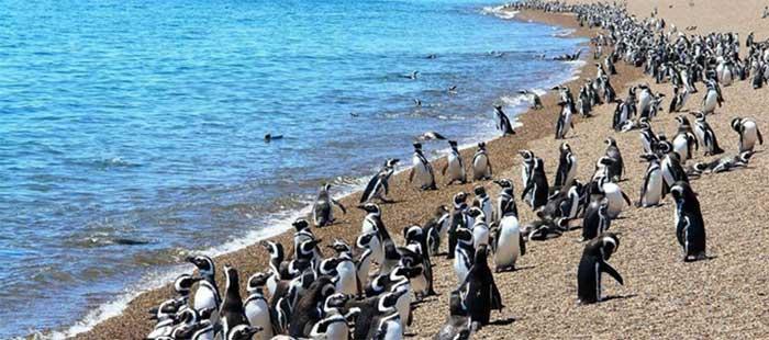 Pinguínos Magallanes