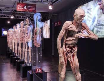 Human Bodies: anatomía de la vida
