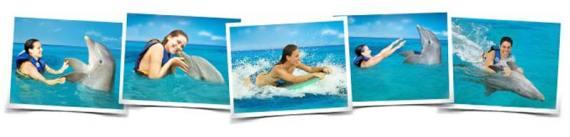 Nadar con delfines Vallarta