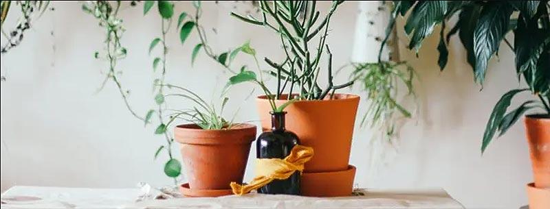 Macetas de barro para plantas