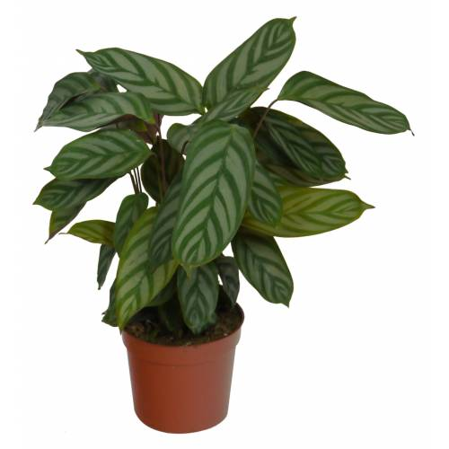 Indoor Plants Good Home