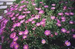 Fleurs-aménagement paysager-Plani-Décor