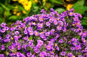 Plani-Décor-Conférence-Harmonisez les couleurs au fil des saisons