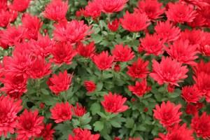 Plani-Décor-Conférence-Un jardin à floraison prolongée