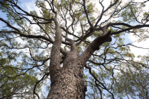 Planning around protected trees
