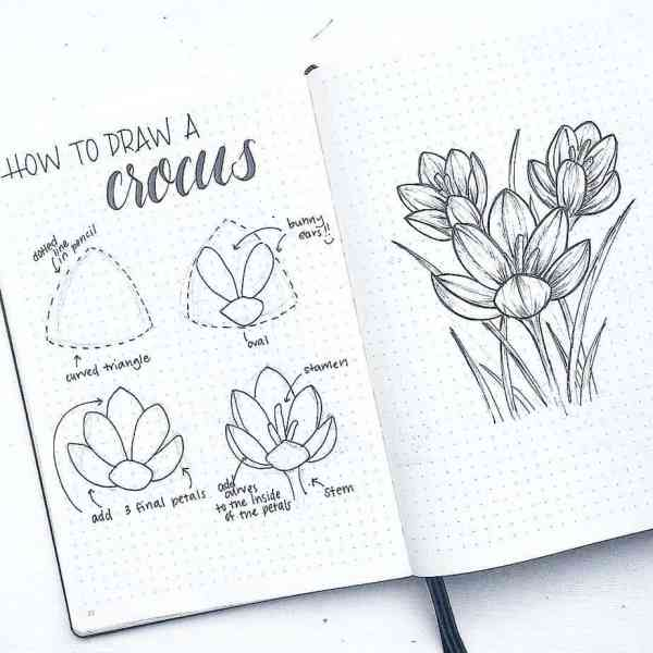 How to draw a crocus.