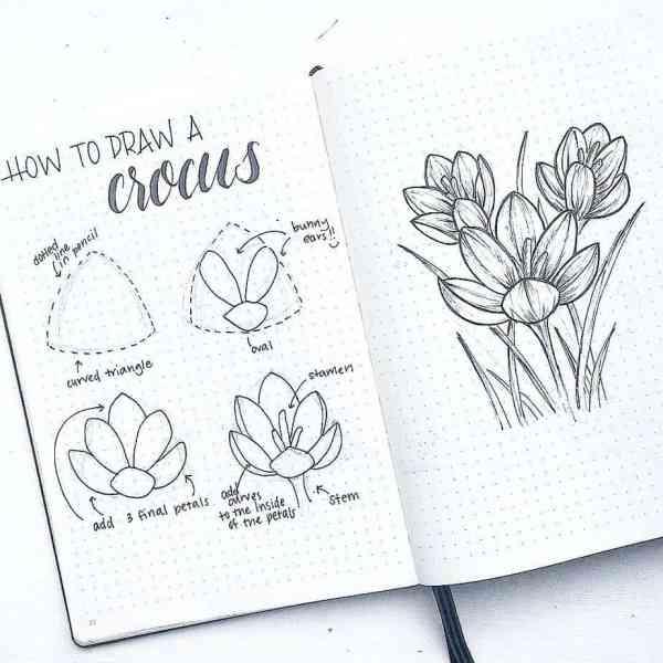 How to draw a crocus.
