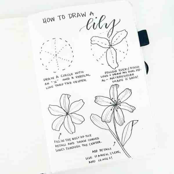 How to draw a lily in your bullet journal.