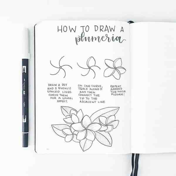 How to draw a plumeria.