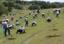 17ma Jornada de Reforestación Banco Popular