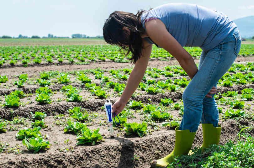Woman using soil pH meter in the Lettuce plants