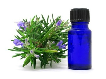 usos del romero, una planta medicinal