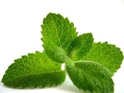 Menta: Beneficios y usos medicinales. Relajante, contra resfriados y más