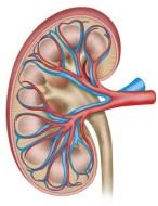 Infecciones urinarias crónicas: tratamiento de con medicina tradicional