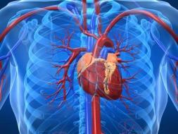 Fallo cardíaco: Tratamiento mediante la Medicina Tradicional China