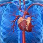 Enfermedad Coronaria y bypass. Regular el bazo y proteger el corazón