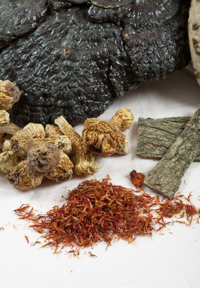 Poria cocos medicina china