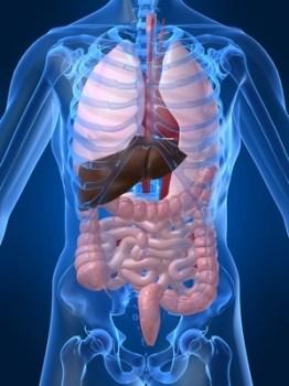 Infusiones y Hierbas limpiadoras y curativas de los Intestinos