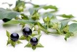 Plantas Tóxicas: Riesgos y contraindicaciones de plantas medicinales
