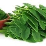 Moringa, Descubre los Beneficios del Maravilloso Árbol de La Vida