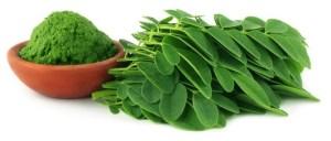 Moringa.Usos medicinales y beneficios del Árbol de La Vida