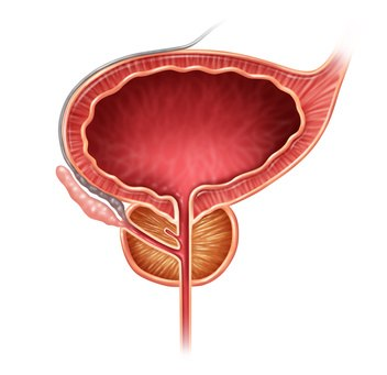 Antígeno Prostático Elevado: plantas medicinales para tratarlo