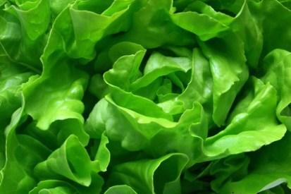 Lechuga: Verdura saludable y Beneficiosa