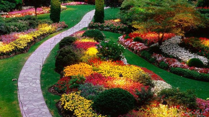 El jardín y sus cuidados durante el verano