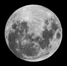 Influencia de la luna en las plantas del jardín