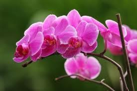 Consejos básicos para cultivar orquídeas