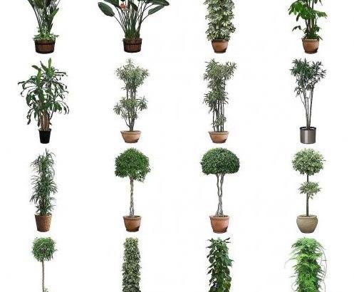 Consejos para comprar plantas