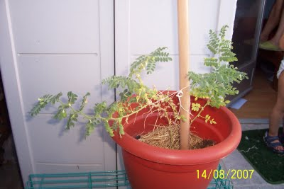 Primeras plantas para los niños