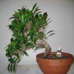 Galería de fotos de bonsáis 6