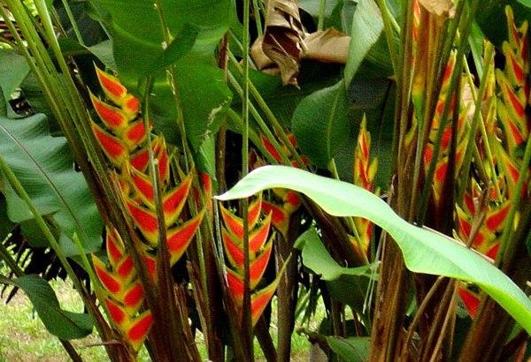 Nuevas plantas contra la diabetes