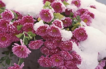 Cómo evitar las heladas en las plantas