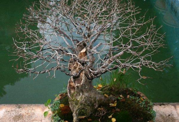 Plantas muertas o ralentizadas?