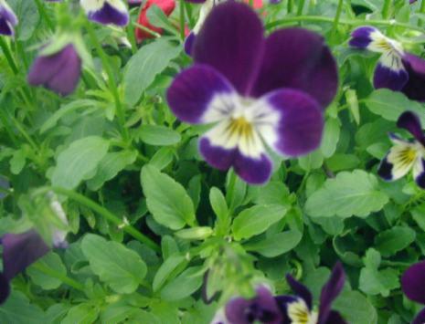 Tareas para las plantas en agosto