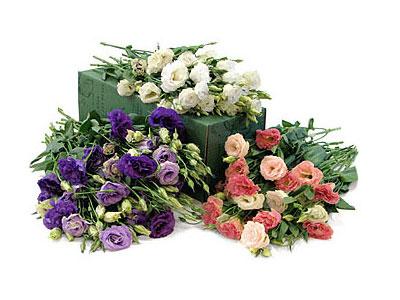 Lisianthus, la rosa japonesa