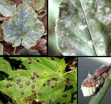 Plantas para combatir plagas