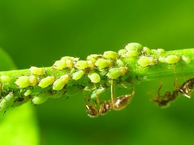 Hormigas en árboles y plantas