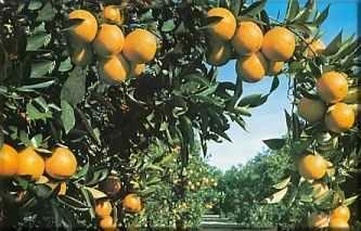Proteger los frutos de tus árboles